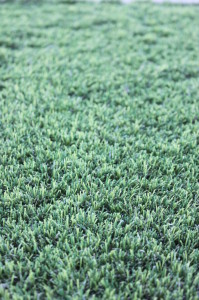 Rebound Synthetic Grass